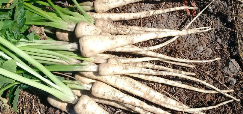 Curried Parsnips recipe